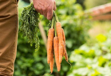 Interesting Facts About Carrots