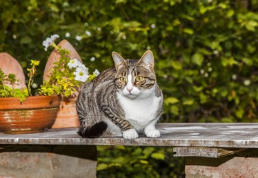 Do Moth Balls Keep Cats Away From Your Garden?