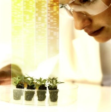 Botany courses teach students about all aspects of plant development and growth.