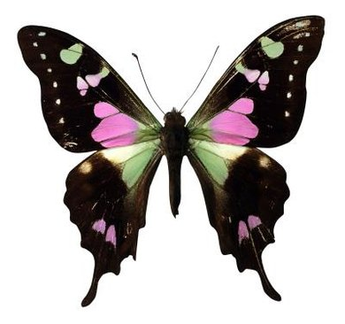 Colorful butterfly wings can capture the attention of even the youngest observer.