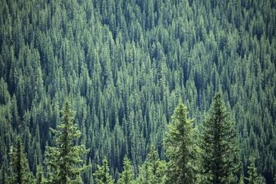Isoprene emissions from forests react with atmospheric gases to create acid rain.