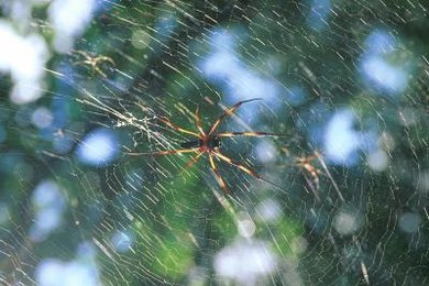 Anansi and his six sons are often depicted in a spider web.