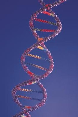 DNA acts as the building blocks of life for most organisms.