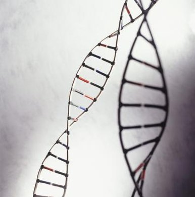Genotype is the blueprint; phenotype is the building.