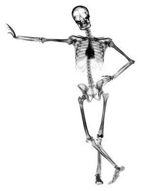 Most adults have 206 bones in their body.