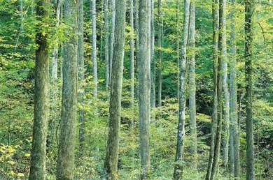 A temperate forest is its own biome, distinct from a tropical forest.