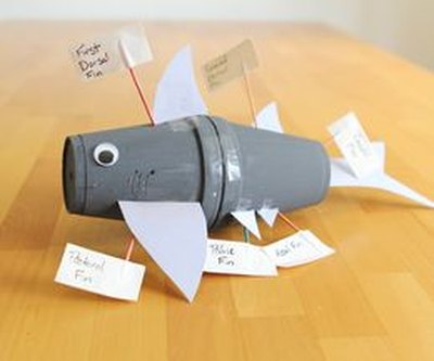 This shark model uses styrofoam cups and toothpick labels.