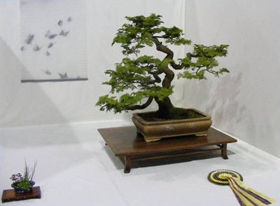 Bonsai with pot example