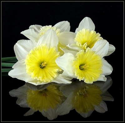Types of easter flowers with pictures ehow narcissus mightylinksfo