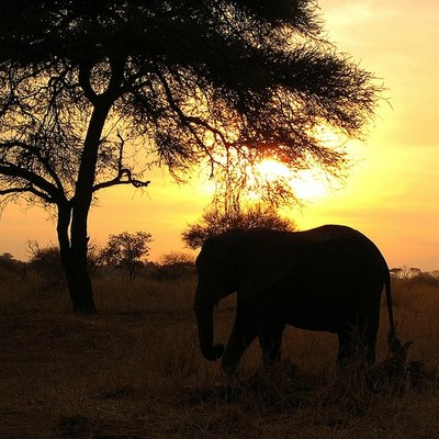 View an African sunset with your own eyes.
