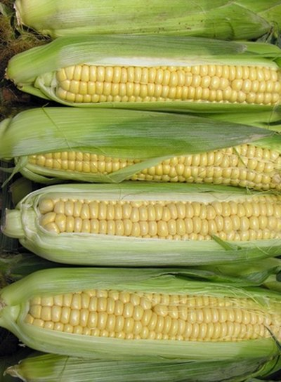 Sweet corn is a favorite warm-weather vegetable.