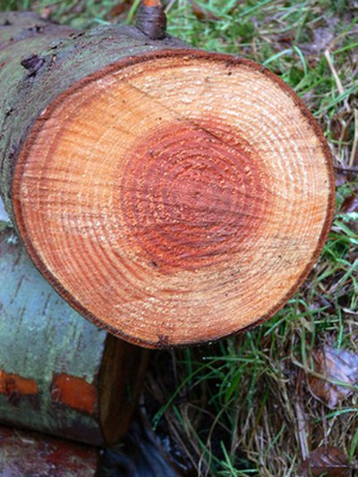 A tree's growth rings are clues to its history.