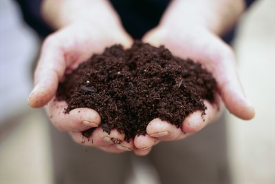 Think of organic compost as your soil's comfort food.