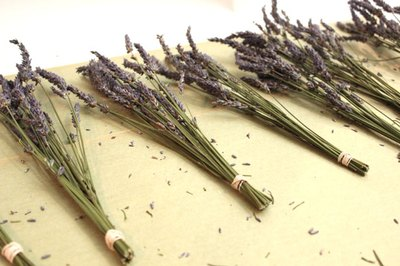 Gather the lavender into bunches.