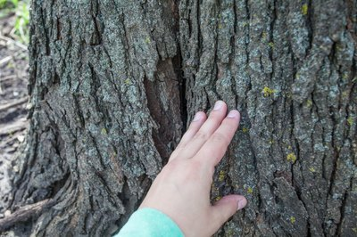 How To Make Fake Tree Bark With Pictures Ehow