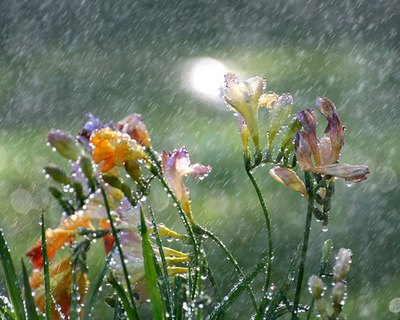 Rainwater: health food for plants.