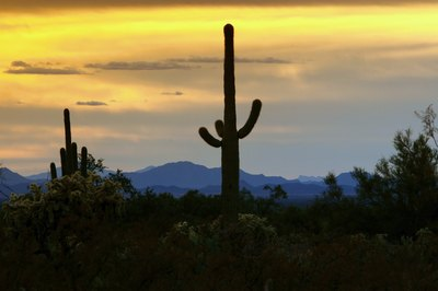 The silhouette of a saguaro cactus in the desert at sunset.