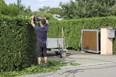 A gardener trimming a privet hedge