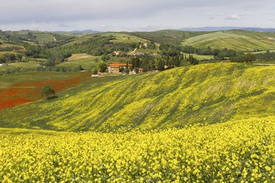 Rolling hills blooming with red and gold wildflowers.