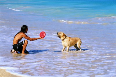 Throw a Frisbee with your dog.