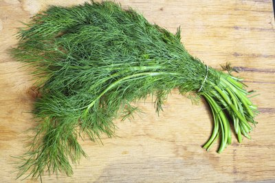 Bunch of freshly picked dill.