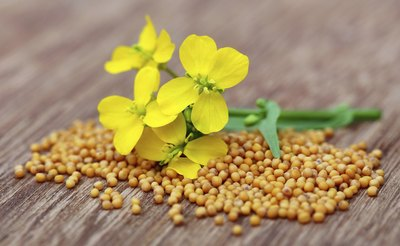 Mustard flower and seeds.