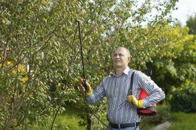 A man in an orchard about to fertilize