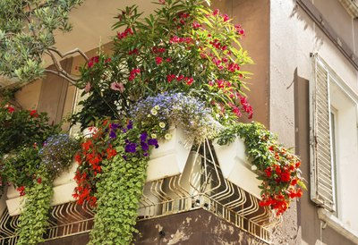 Assorted plants spilling over a balcony in Italy.