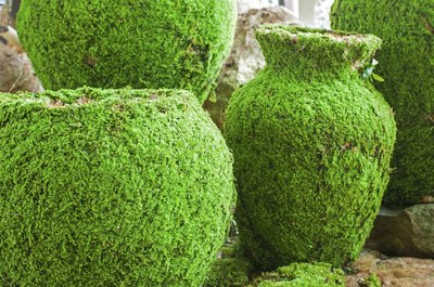 Cover containers or other surfaces with mossy mixtures.