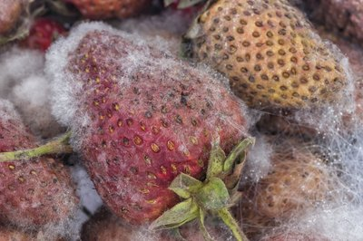 Strawberries with mold spots.