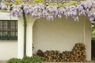 Purple wisteria vines and a firewood pile adorning the exterior of a stucco tudor cottage.