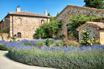 A Tuscan villa with a stone path and beds of lavender.