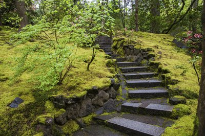 Traditional Japanese gardens feature extensive moss ground covers.