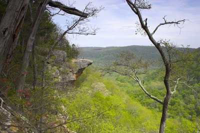 The view of a forested valley from a cliff in Arkansas.
