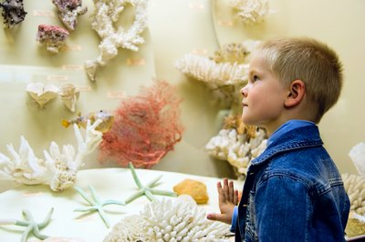 Boy looks at coral in a museum