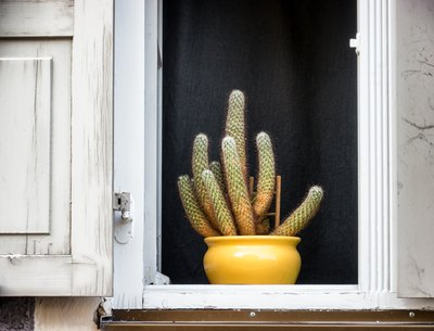 A cactus in a yellow ceramic pot in a window with wooden shutters.