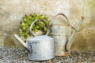 Use a watering can to help distribute water evenly.