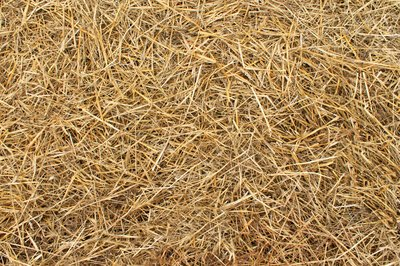Pile of straw over grass