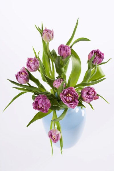 Tulips are recognized as one of the most widely cultivated flowers globally.