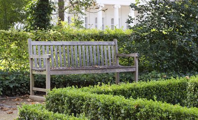 A park bench surrounded by boxwood hedges