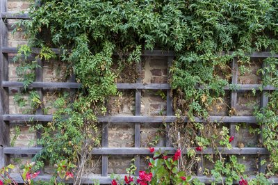 Climbing plants are ornamental as well as functional, providing beauty and coverage.