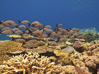 School of fish in the great barrier reef