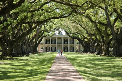 Southern live oak trees covering pathway