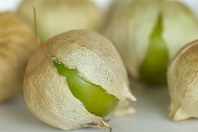 Tomatillos fruit exposed from husk