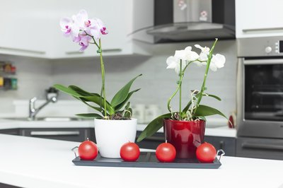 Two orchid plants on kitchen counter.