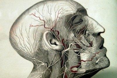 A medical illustration