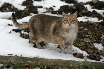 Outdoor kitties can catch a cold from other cats they encounter.