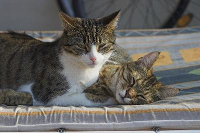 Cats catch ear mites from other cats.