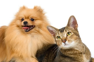 Dogs and cats can live together with proper introductions.