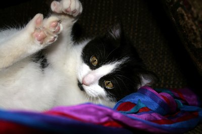 If your cat has fungus on his claws, it's time to schedule a veterinarian appointment.